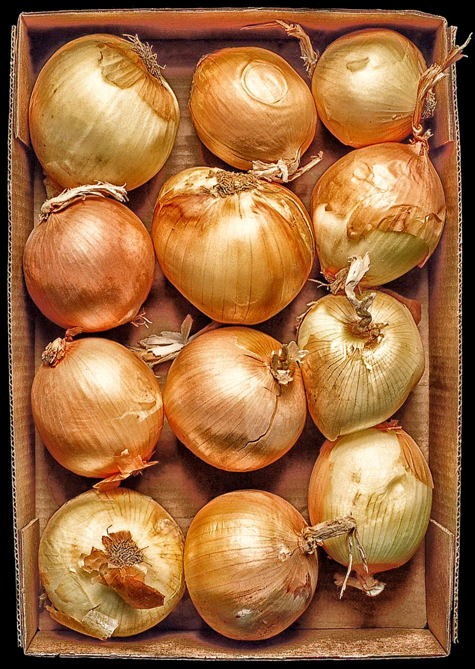 Onions in a Box